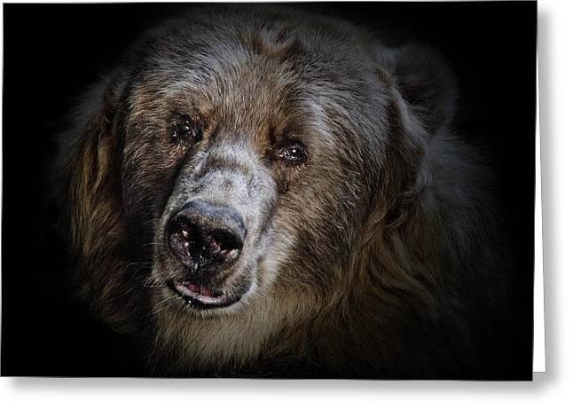 The Kodiak Bear Greeting Card by Animus Photography