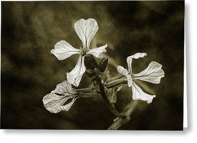 Sepia White Nature Landscapes Greeting Cards - The Last Flowers of Autumn Greeting Card by Scott Norris