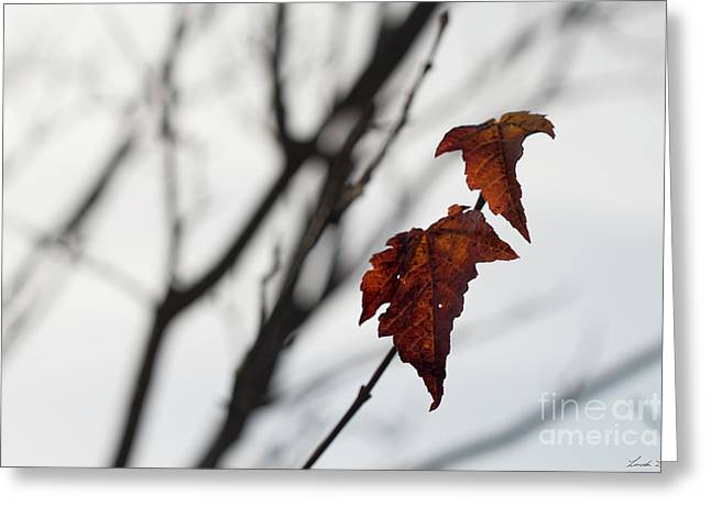 The Last Leaves Of Autumn Greeting Card by Linda Lees