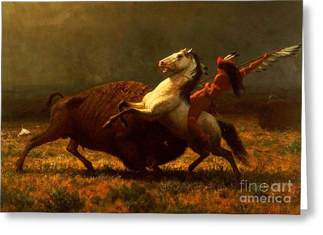 Wild Horses Greeting Cards - The Last of the Buffalo Greeting Card by Albert Bierstadt