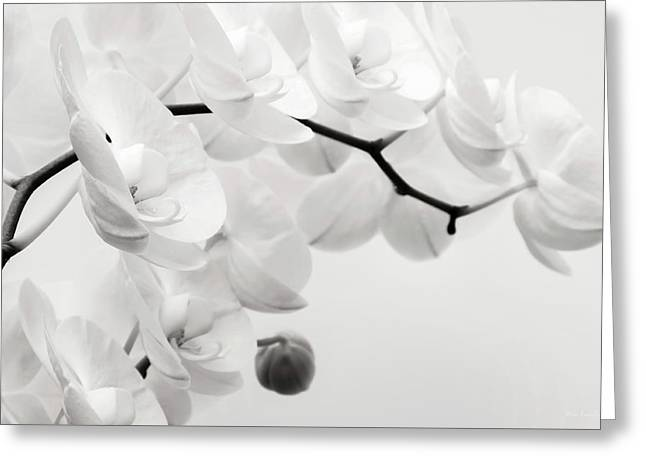 Phalaenopsis Orchid Greeting Cards - The Last Orchid Greeting Card by Wim Lanclus