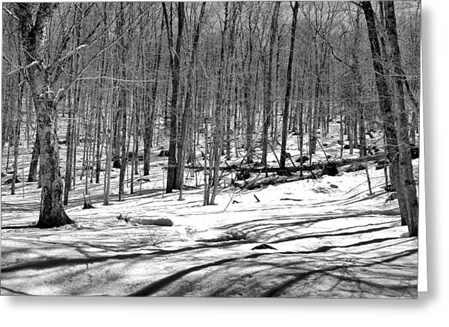 Snowy Field Greeting Cards - The Last Snow on the Maple Ridge Trail Greeting Card by David Patterson