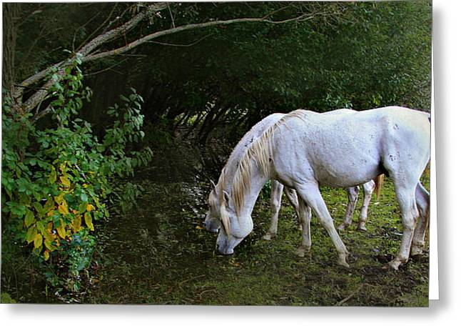 Horse Greeting Cards - The Last Unicorns Greeting Card by El Luwanaya Arabians