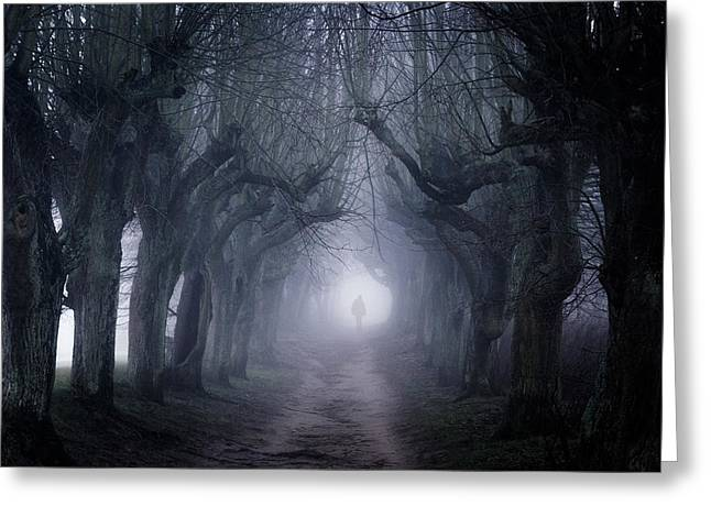 Avenues Greeting Cards - The Last Walk Greeting Card by Heiko Gerlicher