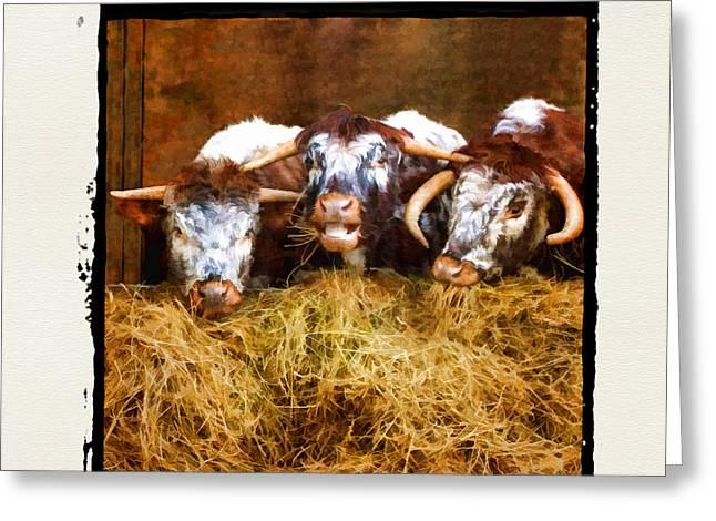 Shabbychic Greeting Cards - The Laughing Cow. Greeting Card by ShabbyChic fine art Photography
