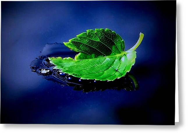Colorful Photography Greeting Cards - The Leaf Greeting Card by Karen M Scovill