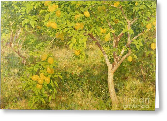 The Lemon Tree Greeting Card by Henry Scott Tuke