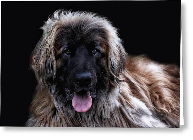 The Leonberger Greeting Card by Joachim G Pinkawa