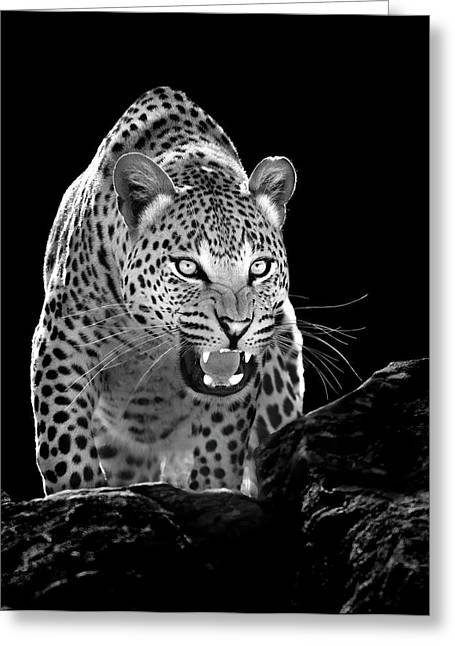 Ferocity Greeting Cards - The Leopards Lair Greeting Card by Stu  Porter