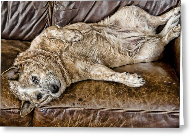 Dog On Couch Greeting Cards - The Life of Sage Greeting Card by Barb Hauxwell