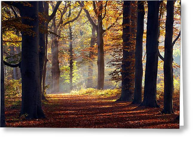 Licht Greeting Cards - The Light at The End of the Tunnel Greeting Card by Roeselien Raimond