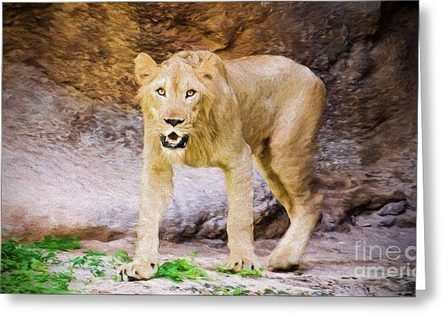 Lioness Greeting Cards - The Lion Pose Greeting Card by Judy Kay