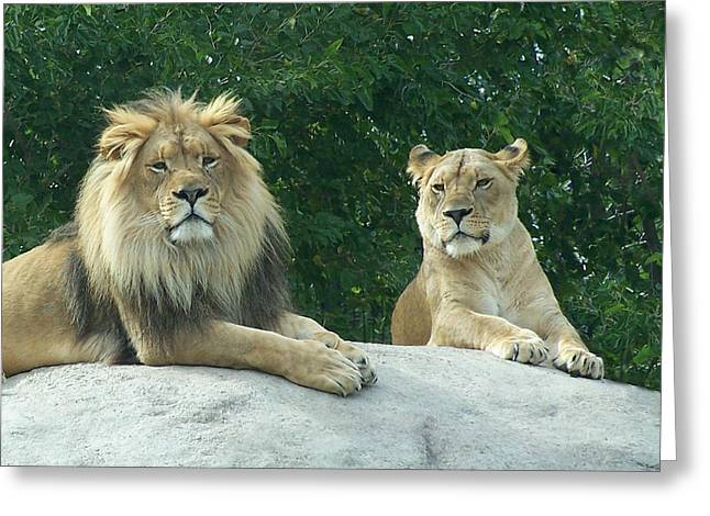 Wildcats Greeting Cards - The Lions Greeting Card by Ernie Echols