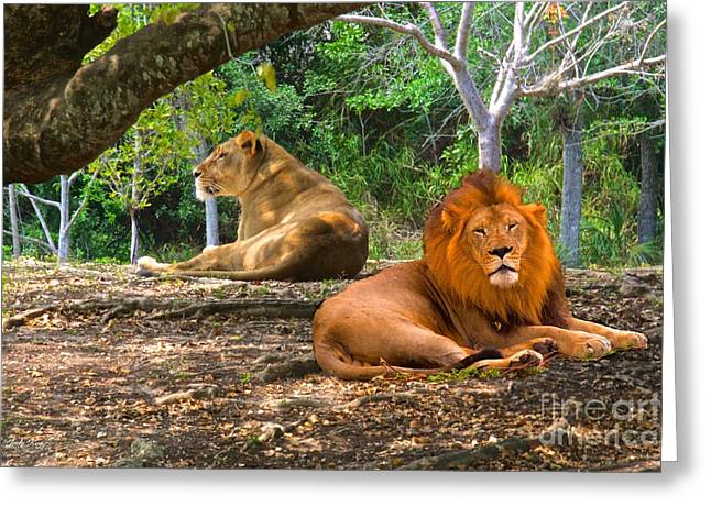 Cats Greeting Cards - The Lions Greeting Card by Judy Kay