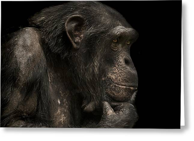 Primate Greeting Cards - The Listener Greeting Card by Paul Neville