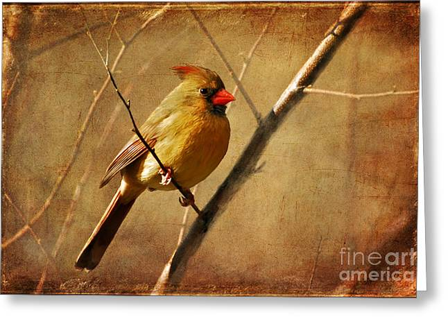Birds In Winters Greeting Cards - The Little Mrs. Greeting Card by Lois Bryan