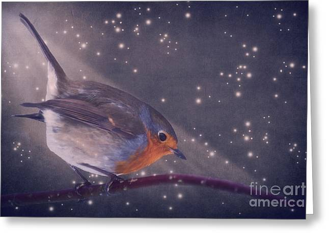 Robin Mixed Media Greeting Cards - The little robin at the night Greeting Card by Angela Doelling AD DESIGN Photo and PhotoArt