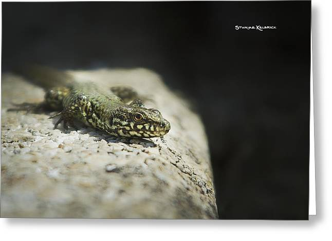 Amateur Photographer Greeting Cards - The Lizard King on the spot Greeting Card by Stwayne Keubrick