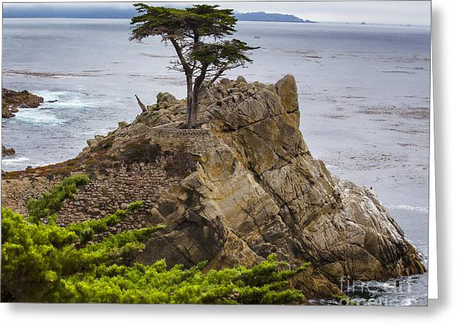 Scenic Drive Greeting Cards - The Lone Cypress - 17 mile drive - California Greeting Card by TN Fairey