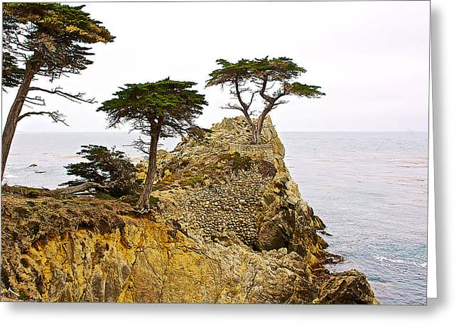 The Trees Greeting Cards - The Lone Cypress near 17 Mile Drive to Pebble Beach-California Greeting Card by Ruth Hager