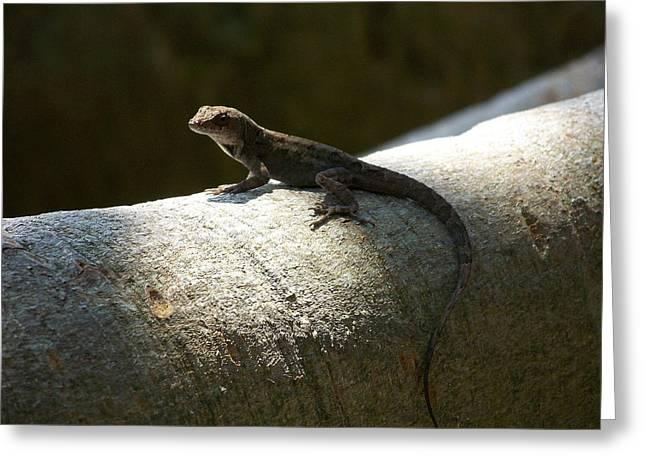 The Lone Lizard Greeting Card by Amanda Vouglas