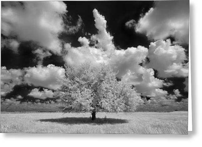 Field. Cloud Greeting Cards - The Lone Tree Greeting Card by Susan Pantuso