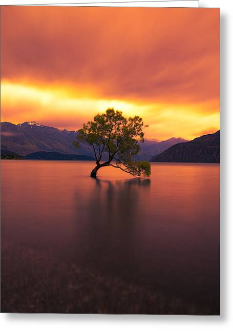 Willow Lake Greeting Cards - The Lone Willow Tree Greeting Card by Andre Distel