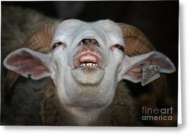 Grimace Greeting Cards - The Look of Love is in Your Upper Lip Greeting Card by Warren Sarle