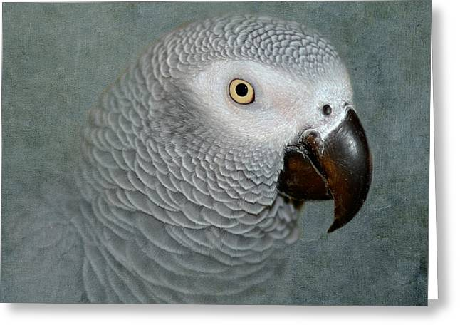 Grey Birds Greeting Cards - The Love of a Gray Greeting Card by Betty LaRue