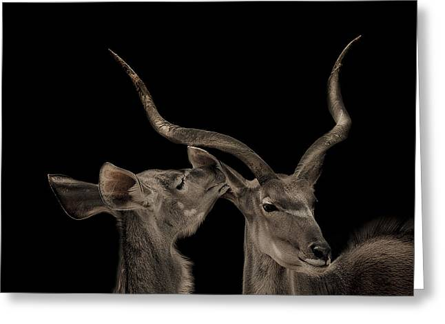 The Lovers Greeting Card by Paul Neville