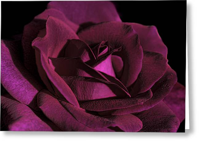 Rose Petals Greeting Cards - The Magenta Rose Flower Greeting Card by Jennie Marie Schell