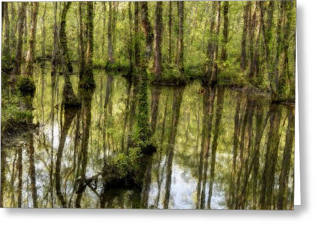 The Trees Greeting Cards - The Marsh Greeting Card by Randy Walton