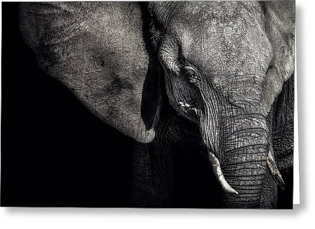 Elephant Greeting Cards - The Matriarch Greeting Card by Piet Flour