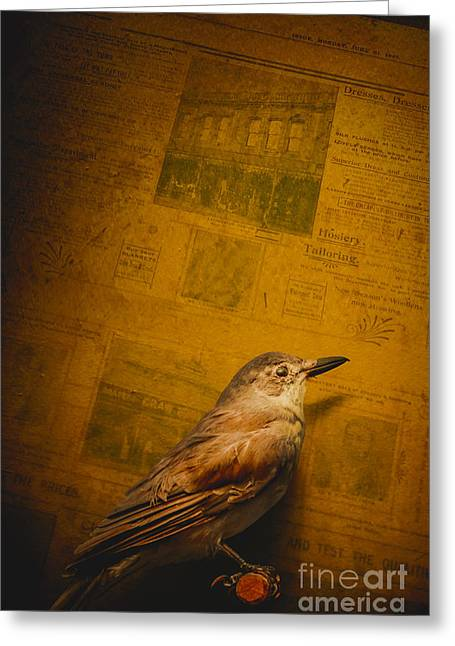 The Messenger Bird Greeting Card by Jorgo Photography - Wall Art Gallery