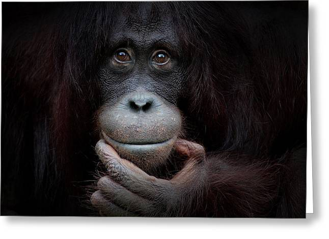 Orang-utans Greeting Cards - The Mirror Image Greeting Card by Antje Wenner