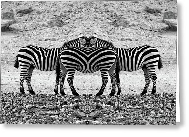 The Mirrord Zebra Greeting Card by Arik Baltinester