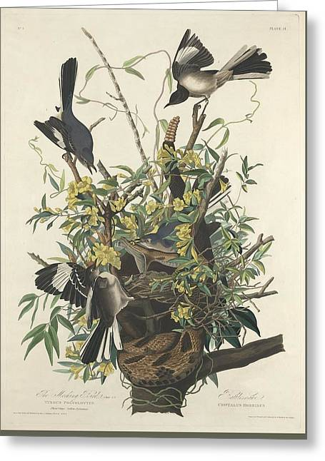 The Mockingbird Greeting Card by John James Audubon