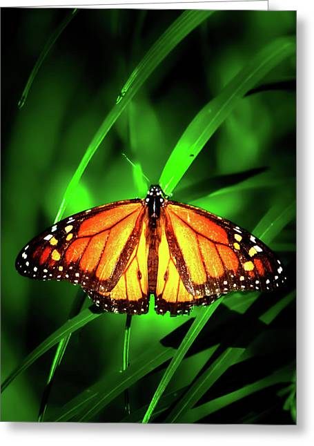 The Monarch Tree Greeting Card by Mark Andrew Thomas