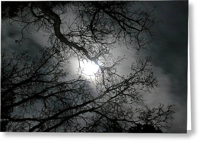 Winter Night Greeting Cards - The Moon Prevails  Greeting Card by Angie Wingerd