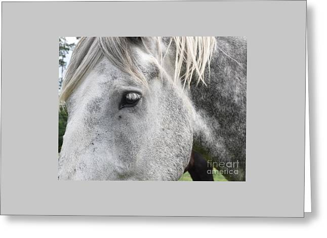 Matron Greeting Cards - Gentle Mother  Horse Greeting Card by Joan Kaplan