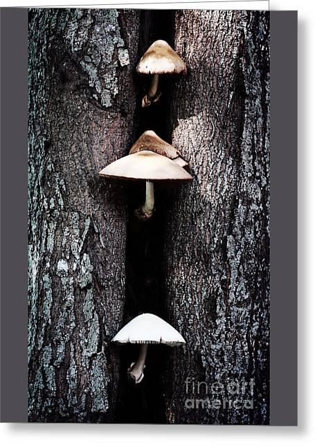 Toadstools Digital Greeting Cards - the Mushroom Tree Greeting Card by Ella Kaye Dickey
