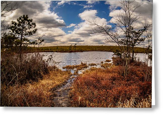 New Jersey Pine Barrens Greeting Cards - The Mysterious Pine Lands Greeting Card by Louis Dallara