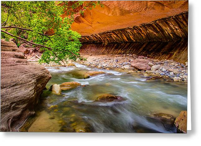 Wall Street Photographs Greeting Cards - The Narrows Zion National Park Greeting Card by Scott McGuire