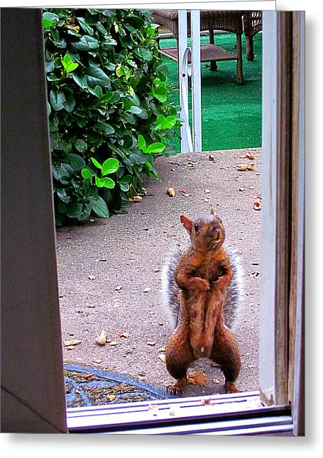 Guy Ricketts Photography Greeting Cards - The Neighborhood Flasher Greeting Card by Guy Ricketts