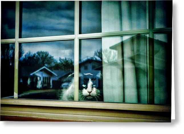 Paint Photograph Greeting Cards - The Neighborhood Watch - animals cats  Greeting Card by Ann Powell