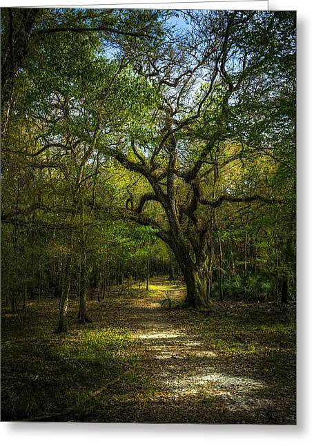 The Oak Trail Greeting Card by Marvin Spates