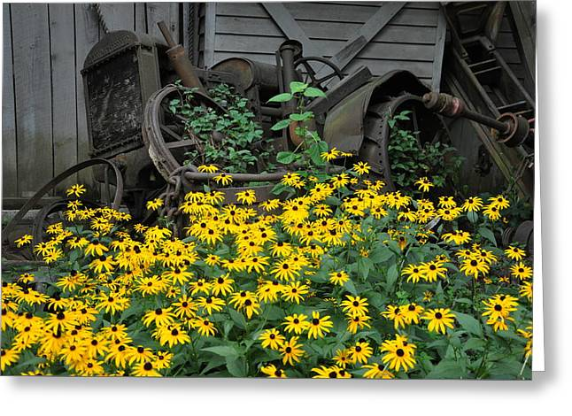 Brown Eye Susan Greeting Cards - The Old And New Greeting Card by Jan Amiss Photography
