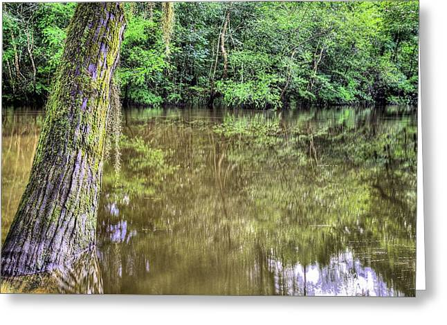 Rural Florida Greeting Cards - The Old Cypress Tree Greeting Card by JC Findley
