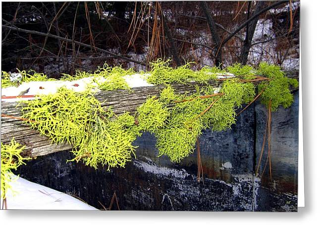 Pine Needles Greeting Cards - The Old Mossy Flume Greeting Card by Will Borden