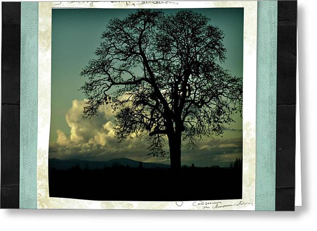 Sundown Framed Prints Greeting Cards - The Old Oak Greeting Card by Bonnie Bruno